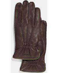 COACH Deerskin Gloves - Brown