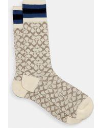 COACH Signature Socks - Multicolor