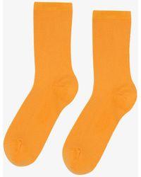 COLORFUL STANDARD Classic Organic Sock - Orange