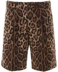 Dolce & Gabbana Leopard Print Bermuda Trousers 50 Cotton - Brown