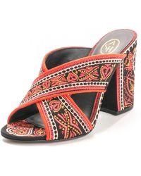 Ash Lola Canvas Shoes - Black