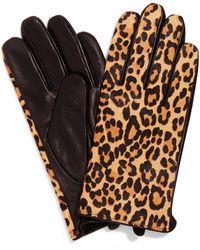 Phase Eight Liz Leopard Print Gloves - Brown