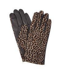 Hobbs 'emma' Gloves - Multicolour