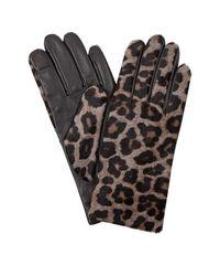 Hobbs Emma Glove - Grey