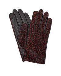 Hobbs 'emma' Gloves - Red