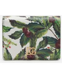 Dolce & Gabbana Small Continental Wallet With Chestnut Print On A White Background In Dauphine Calfskin - Grün