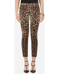 Dolce & Gabbana Five-Pocket Leopard-Print Pants - Mehrfarbig