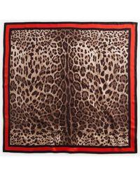 Dolce & Gabbana Framed Neck Scarf - Brown