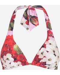 Dolce & Gabbana Gepolstertes Triangel-Bikinitop Geranien-Print - Mehrfarbig