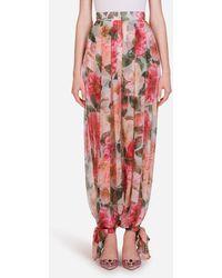 Dolce & Gabbana Camellia-print Chiffon Pants - Pink
