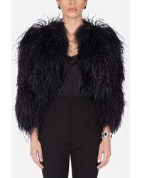 Dolce & Gabbana Ostrich Feather Bolero - Black