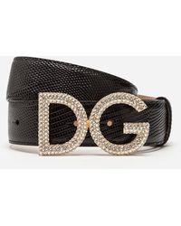 Dolce & Gabbana Cinturón De Becerro Con Estampado De Iguana - Negro