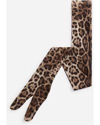 Dolce & Gabbana Leopard Print Tights In Tulle - Marrón