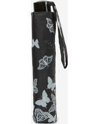 Dorothy Perkins Stencil Butterfly Umbrella - Multicolor