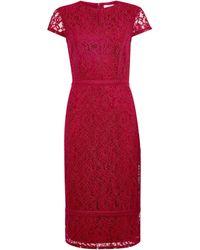 Dorothy Perkins Dp Tall Raspberry Lace Pencil Dress - Purple