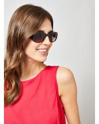 Dorothy Perkins Brown Tortoiseshell Boston Sunglasses
