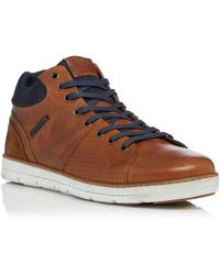 Dune Stakes High Top Trainers - Brown
