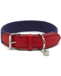 Mulberry 3cm Dog Collar - Lyst