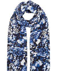 Precis Petite - Blue Floral Print Scarf - Lyst
