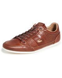 Lacoste Chaymon 120 Sneakers - Brown