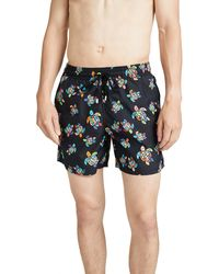 suge Whales Colorful Sea Women Beach Pants with Mesh Lining Swimwear