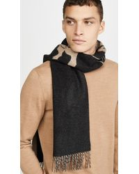 COACH Rexy And Carriage Cashmere Scarf - Black