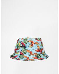 Cayler & Sons Paradise Bucket Hat - Blue
