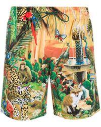 Dolce & Gabbana Costume da bagno Animal Kingdom - Verde