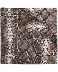 Preen By Thornton Bregazzi Snake Print Neck-tie Scarf - Brown