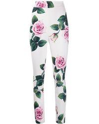 Dolce & Gabbana Legging Met Tropische Print - Wit