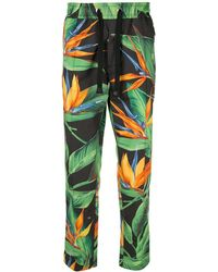 Dolce & Gabbana Bird of paradise print track trousers - Noir