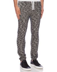 Black Scale Black Barfield Sweatpant - Lyst