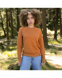 Gandys Burnt Orange Selva Cotton Crew Neck Knit - Multicolour