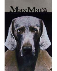 Max Mara T-shirt Dogstar in cotone grigio