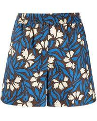 P.A.R.O.S.H. Pantaloncini a fiori blu