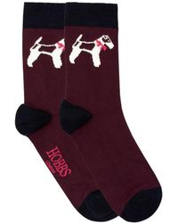 Hobbs - Bailey Dog Sock - Lyst