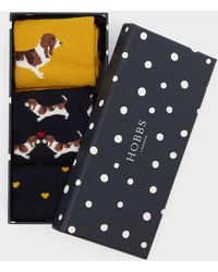 Hobbs Beagle Dog Sock Set - Blue