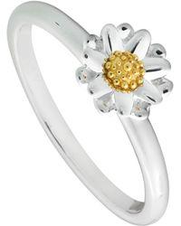 Daisy London - Sr511 Ladies Ring - Lyst
