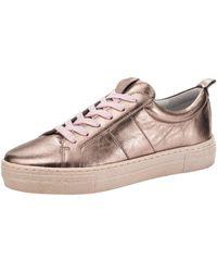 Filipe Shoes Sneaker - Meerkleurig