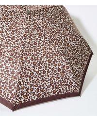 LOFT Leopard Print Umbrella - Multicolour