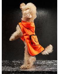 Moncler Genius Abrigo Para Perro De Nylon Con Logo - Naranja