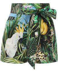 Dolce & Gabbana Short En Popeline De Coton Imprimé Jungle - Vert