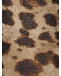 Dolce & Gabbana Колготки С Леопардовым Принтом - Многоцветный