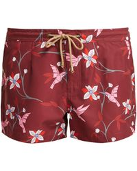 Thorsun - Athena Floral Print Beach Shorts - Lyst