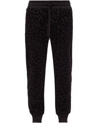Dolce & Gabbana レオパード コットントラックパンツ - ブラック
