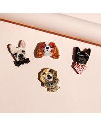 Mignonne Gavigan Bedazzled Dog Brooches - Multicolor