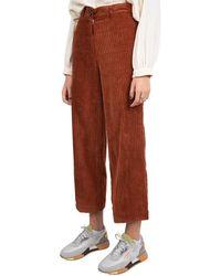 Sessun Pantalon - Oranje