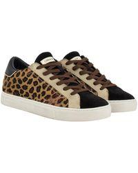 Crime Low top essential leopard - Braun