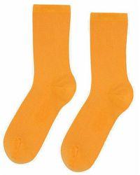COLORFUL STANDARD Calcetines Women Classic Socks - Orange