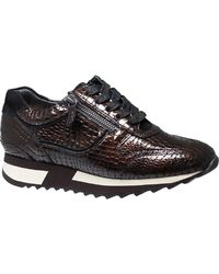 HASSIA Sneaker Barcelona 0-302027 8600 - Marrone